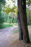 Weg en bomen Royalty-vrije Stock Afbeeldingen