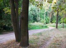 Weg en bomen Royalty-vrije Stock Foto