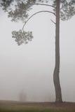 Weg en boom in mist De bomen met mist in het bos Stock Afbeeldingen