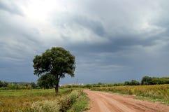 Weg en boom onder onweershemel Stock Foto's