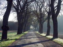 Weg en mooie oude bomen in de lente, Litouwen stock foto's