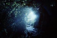 Weg en steentreden in magisch en geheimzinnig donker bos met mystiek zonlicht Sprookjeconcept royalty-vrije stock afbeelding