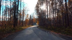 Weg entlang dem HerbstWaldweg stock footage