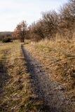 Weg entlang dem Wald, auf den Feldern Lizenzfreie Stockfotografie