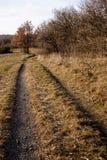 Weg entlang dem Wald, auf den Feldern Stockbild