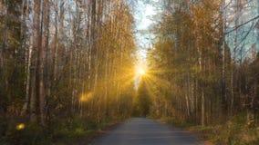 Weg entlang der HerbstWaldwegvideoschleife stock video footage