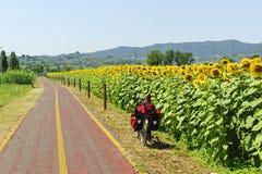 Weg für Fahrräder und Sonnenblumen in Toskana stockfotografie