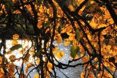 Weg fallen Blätter sind im Wasser Lizenzfreie Stockbilder
