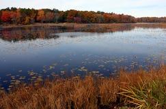 Weg fallen Blätter sind im Wasser Stockbild