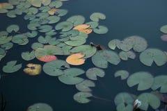 Weg fallen Blätter sind im Wasser Stockfotografie