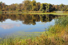Weg fallen Blätter sind im Wasser Lizenzfreies Stockfoto