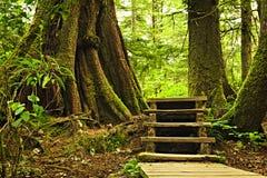 Weg in gematigd regenwoud stock foto's