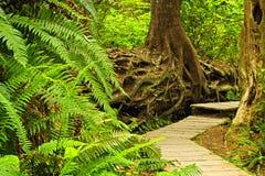 Weg in gematigd regenwoud stock afbeeldingen