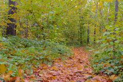Weg gestreut mit gefallenen Blättern Lizenzfreie Stockfotos