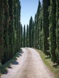 Weg gezeichnet mit Zypressenbäumen in Toskana Lizenzfreie Stockbilder