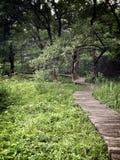 Weg in gras en bos Royalty-vrije Stock Afbeelding