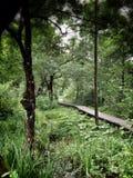Weg in gras en bos Stock Fotografie