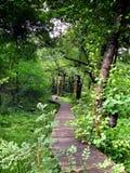 Weg in gras en bos Stock Afbeeldingen