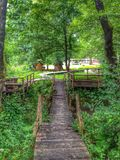 Weg in gras en bos in HDR Royalty-vrije Stock Afbeelding