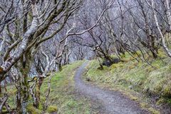 Weg in Griezelig Bos in Schotland stock foto's