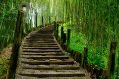Weg in groen bamboebos royalty-vrije stock fotografie
