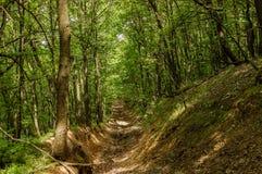 Weg in groen bos Stock Foto's