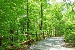 Weg in groen bos Stock Afbeelding