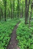 Weg in groen bos Royalty-vrije Stock Afbeelding