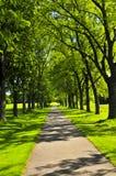 Weg in groen park stock fotografie