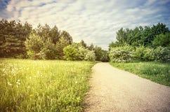 Weg in groen platteland Stock Foto