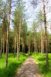 Weg herein zum Holz Stockbild