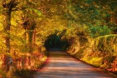 Weg in herfstbos stock afbeeldingen