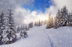 Weg in het bergbos Royalty-vrije Stock Foto's
