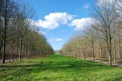 Weg in het bos Stock Foto