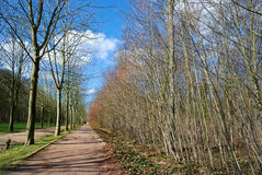 Weg in het bos Royalty-vrije Stock Fotografie