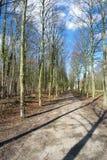 Weg in het bos Stock Afbeelding