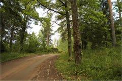 Weg in het bos. Stock Foto