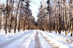 Weg in het bos Royalty-vrije Stock Afbeeldingen