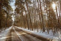 Weg in het bos stock afbeeldingen