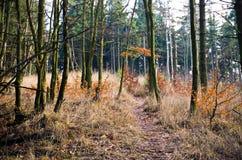 weg in het bos Stock Foto's
