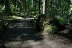 weg in het bos Royalty-vrije Stock Foto's