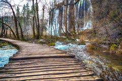 Weg in het bos bij de herfst Stock Foto