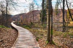 Weg in het bos bij de herfst Stock Fotografie
