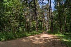 Weg in het bos, de dag van de één zomer Royalty-vrije Stock Afbeeldingen