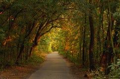 Weg het bos in diepe  Stock Foto