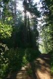 Weg in het bos (manor Mihailovskoe) Stock Afbeeldingen