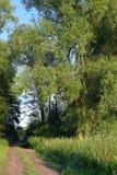 Weg in het bos met groene bomen stock afbeeldingen