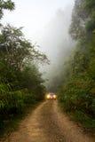 Weg in het bos met mist Stock Afbeelding