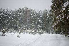 Weg in het bos met sneeuw wordt behandeld die royalty-vrije stock afbeelding