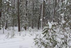 Weg in het bos met sneeuw wordt behandeld die royalty-vrije stock foto